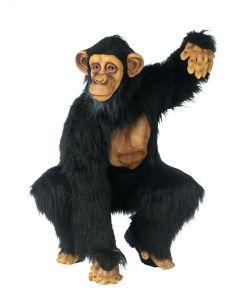Complete Chimpanzee