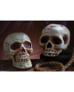 """8"""" Skull"""