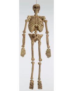 5 ft. Realistic Skeleton