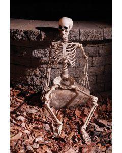 "36"" Articulated Skeleton"