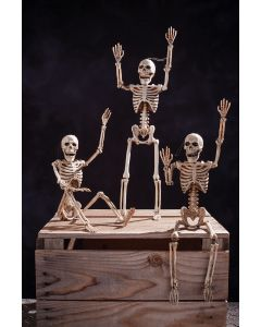 "14"" Posable Skeleton"