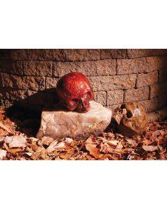 """7"""" Catacomb Skull Assortment"""