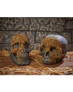 Moss Covered Skull  Assortment