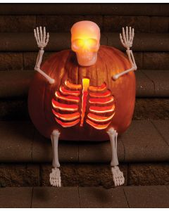 LU Pumpkin Bones Carve & Decorating Kit