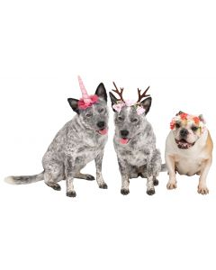 Pup Fantasy Headband Assortment